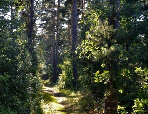 Välkommen till nya Hemsidan för Havängs Sommarby